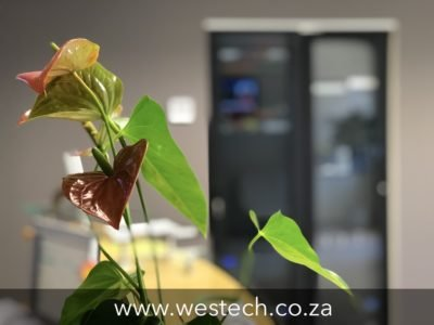 westech best it support company in south africa 2019
