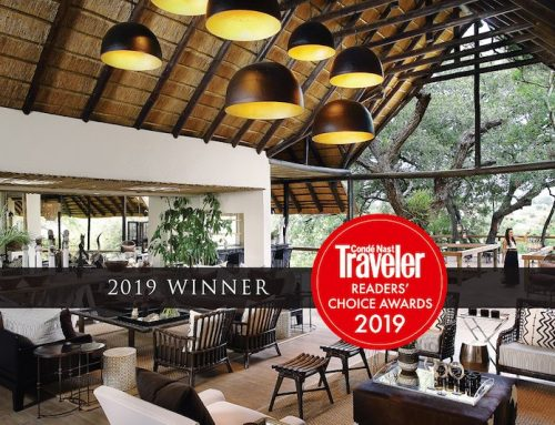 Londolozi cleaning up the Traveler awards